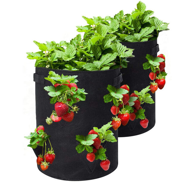 Strawberry Grow Bags (Pack of 2)