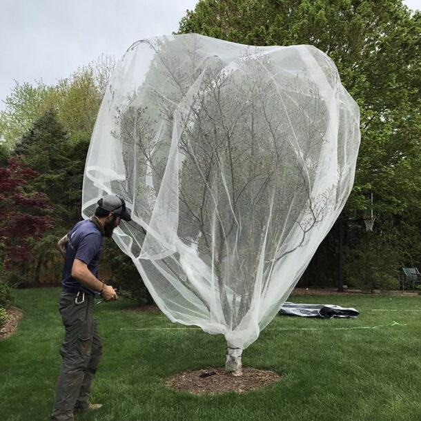 Fruit Tree Bird Netting